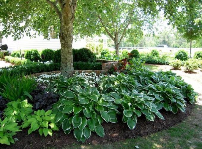 Nos conseils pour choisir les plantes et arbustes pour votre ...